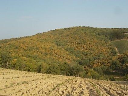 estete 2021 siccità bosco (2)