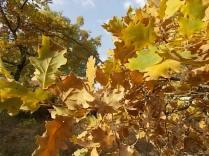 estete 2021 siccità bosco (9)