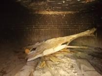 forno a legna vertine (2)