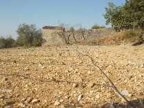 irrigazione a goccia di un vigneto (9)