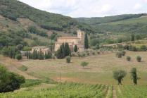 ulivi carichi di olive sant'antimo (1)