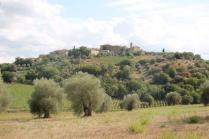 ulivi carichi di olive sant'antimo (11)