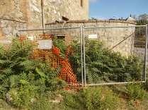 ailanto della berardenga (1)