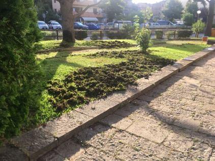 aratura cinghiali giardini scuola gaiole in chianti (1)