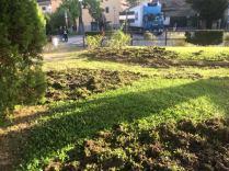 aratura cinghiali giardini scuola gaiole in chianti (2)