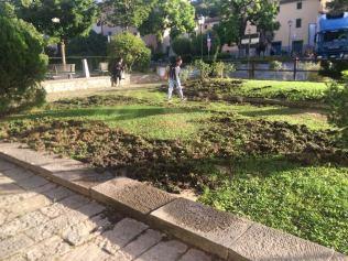 aratura cinghiali giardini scuola gaiole in chianti (3)