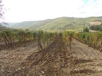 vertine la semina del favino da sovescio (1)
